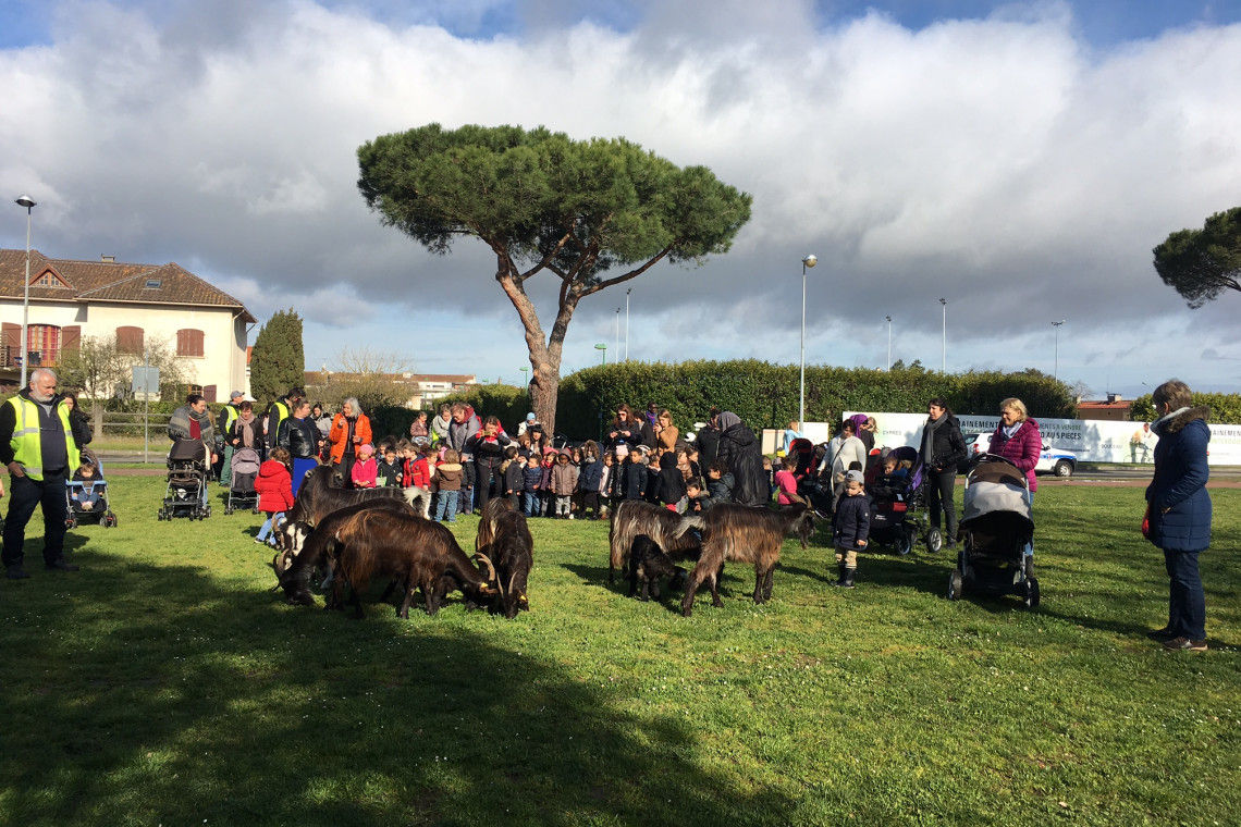 Plaine Loubayssens - chèvres
